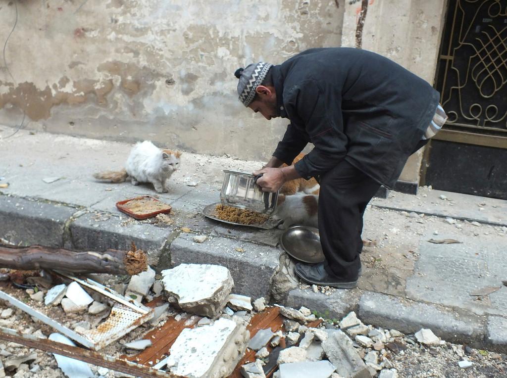 . A man gives food to cats in the al-Khalidiya neighborhood of Homs December 5, 2012. REUTERS/Yazan Homsy (