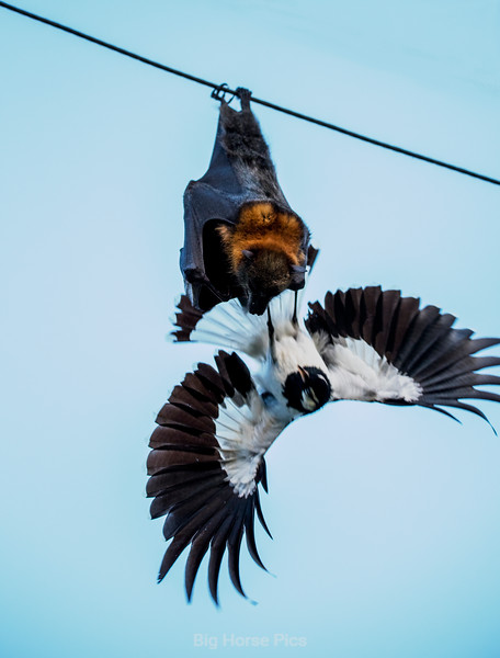 flying fox 1.jpg