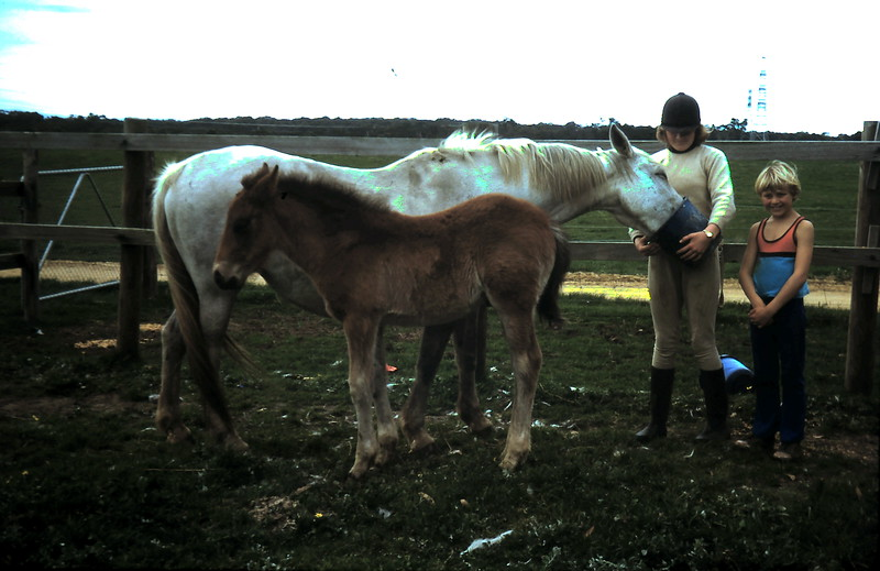 1977-8 (11) Susan 12 yrs 1, Andrew 8 yrs with Blue Lady & foal.JPG