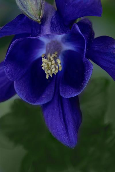 Flowers050621-179-Edit.jpg