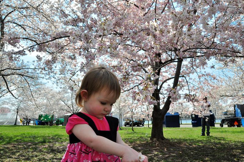 Cherry Blossoms 2014 060.jpg