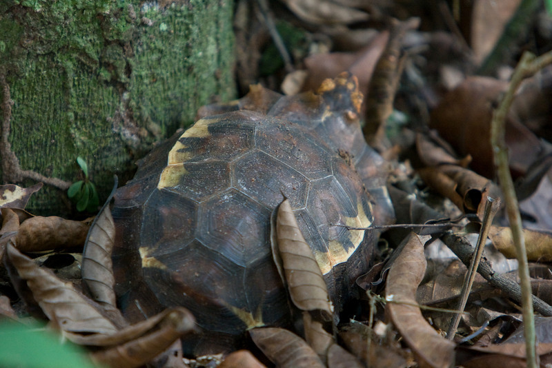 Turtle well camouflaged in the woods.