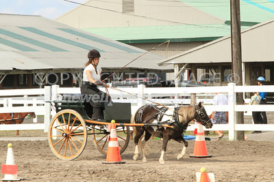 Timed Cones Pony, d13