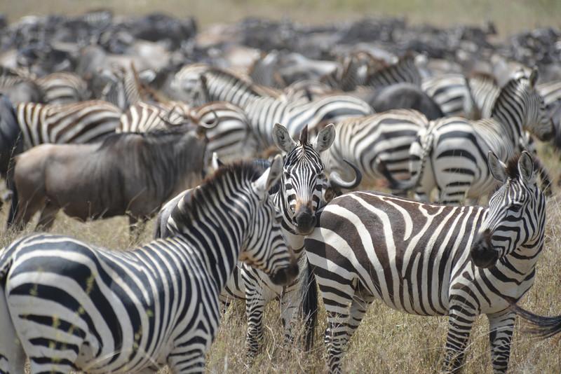 East Africa Safari 327.jpg