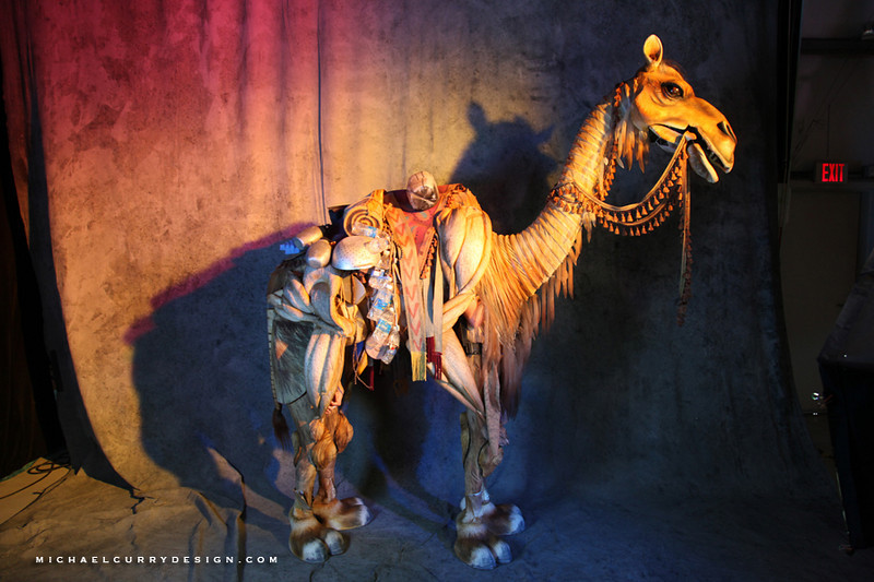 magnifico Camel.JPG