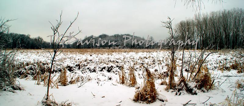 lincoln marsh