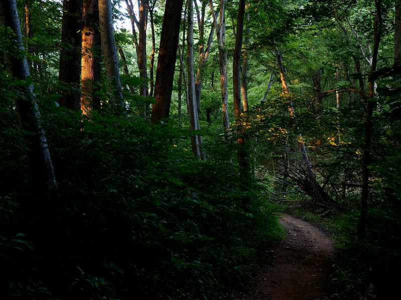 Clayton trail.jpg