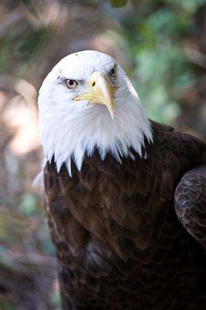 2008 Little Rock Zoo
