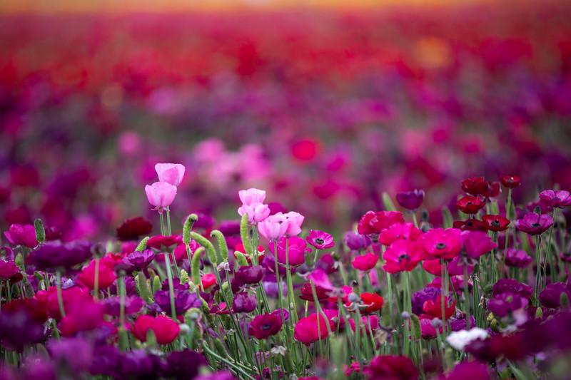 Spring Flowers B-413.jpg