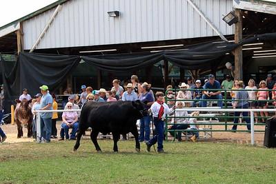Intermediate Beef Showmanship 3
