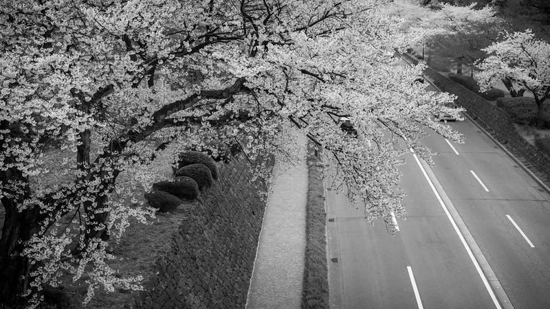 kanazawa 09053 .jpg