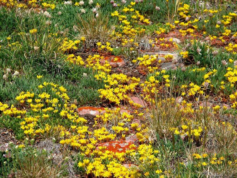 amh FLOWERS (1359).jpg