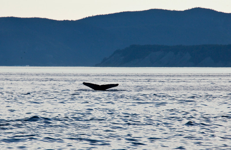2011 quebec whale watching (69 of 80).jpg