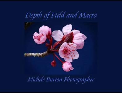 Macro 04 - Depth of Field