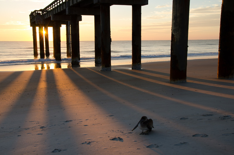 Sunrise at St. Augustine Peir.  This pelican really wanted to be in my photo.