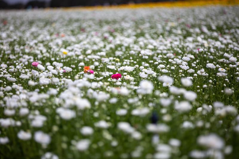 Spring Flowers B-309.jpg