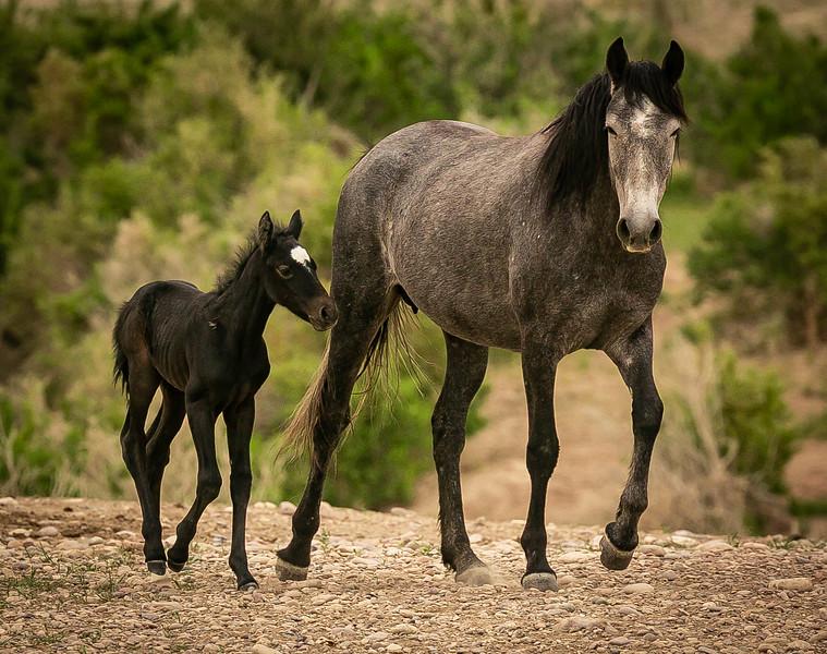 buckskin & colt2.jpg