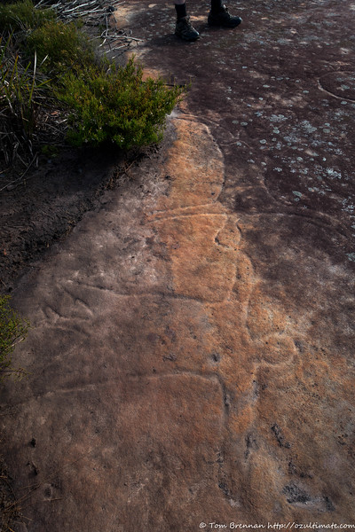 Well endowed rock engravings - and clearly demonstrating social distancing!