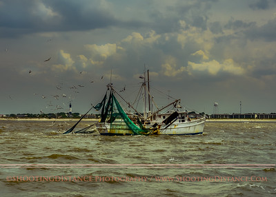 Gulls and pelicans accompany the Kathy Dean into harbor at Tybee Island, GA