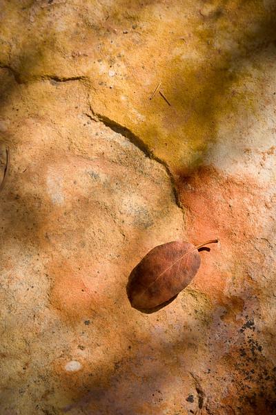 'Leaf on Sandstone' - Mule Canyon, Cedar Mesa, Utah, USA