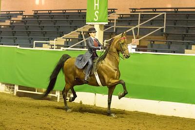 66 - Reg. American Saddlebred 3 Gaited Show Pleasure 17 & Under