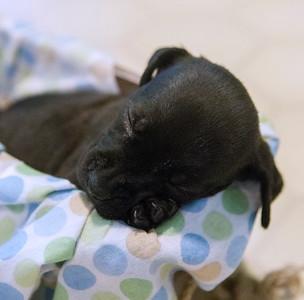 IAR 08-27-16 Sophie & Puppies