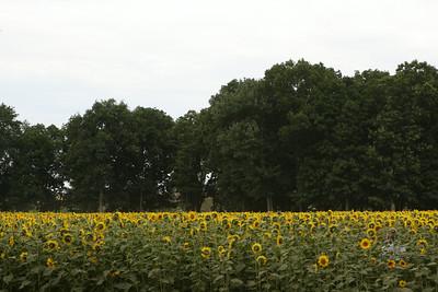 Buttonwood Farm  07-26-14