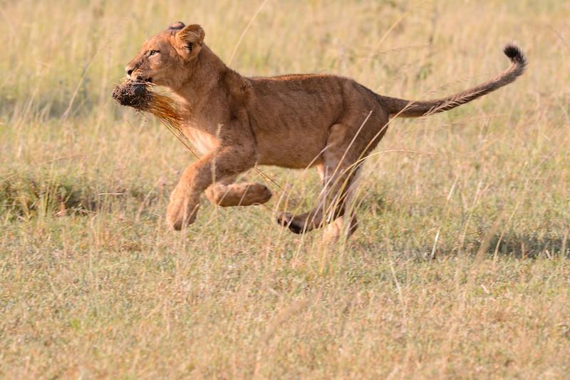 20160215__KET7965_Serengeti_Day_7.jpg