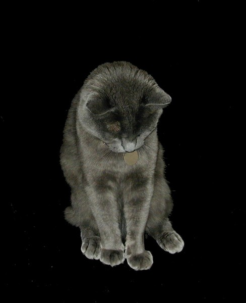 shy rosie (portrait).jpg