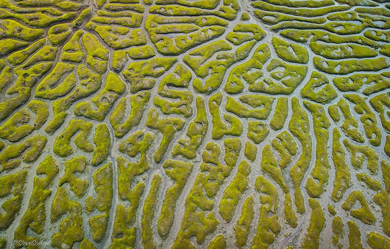 Morro_Bay_Estuary_Patterns_Central_Coast_California-0087.jpg