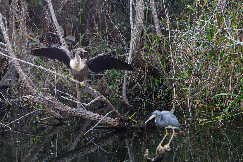 Everglades NP-0334-Select_E.jpg