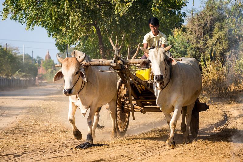 088-Burma-Myanmar.jpg