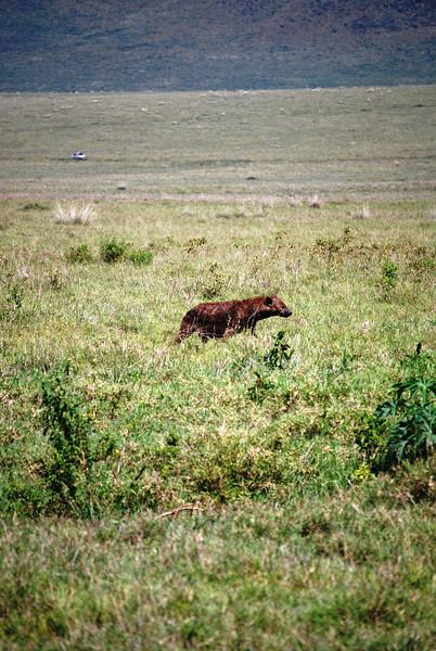 Ngorongoro (166).JPG