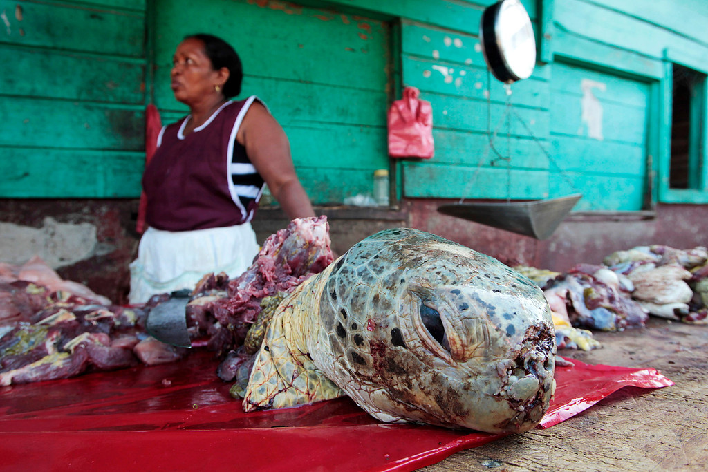 . An indigenous Miskito woman sells turtle meat at a town market in Puerto Cabezas, along Nicaragua\'s Caribbean coast August 25, 2010. Around five hundred turtles are sold for food per month in the port. The going rate for turtle meat is approximately $1.10 per pound. Picture taken August 25, 2010. REUTERS/Oswaldo Rivas