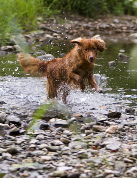 PINKY HAVING FUN IN THE CREEK!