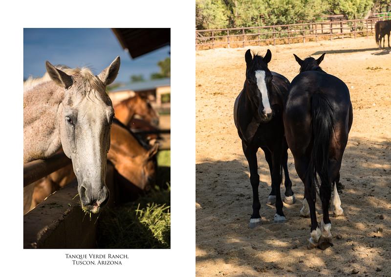 Horses feeding.jpg