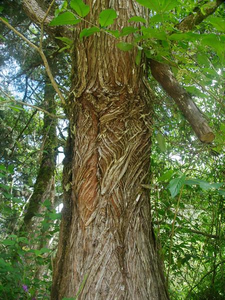 gnarly bark