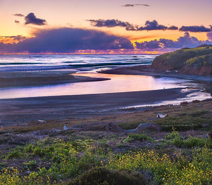 San Simeon Sunset Wildflower California Central Coast.jpg