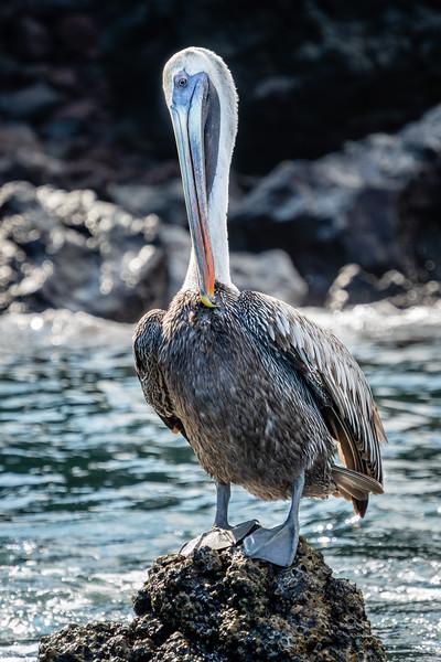 Galapagos-3085-2.jpg