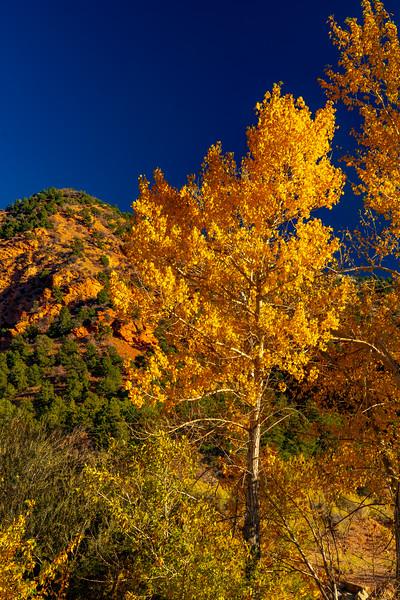 Fall Colors Along Cedar Creek