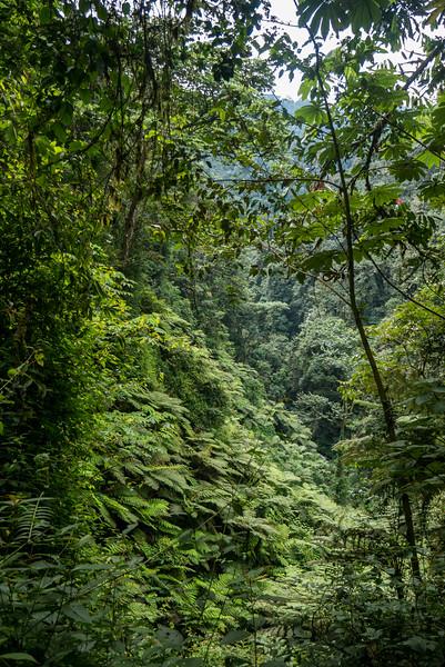 Nyugwe-Rwanda-26.jpg