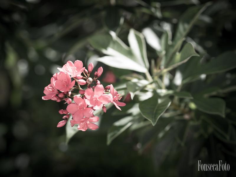 fonsecafoto-75mm-0057.jpg