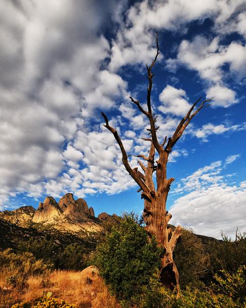 NEA_2455-16x20-Tree.jpg