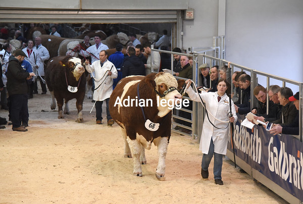 Stirling Bull Sales Feb 2019