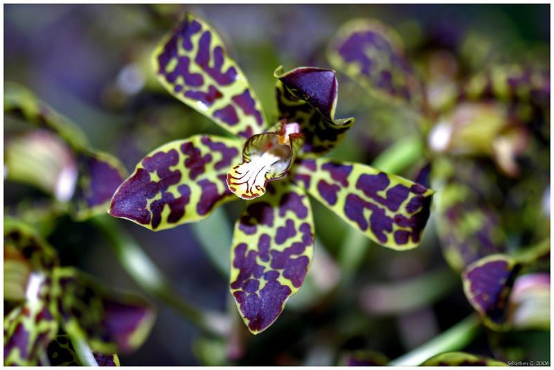 Orchid14_082209.jpg