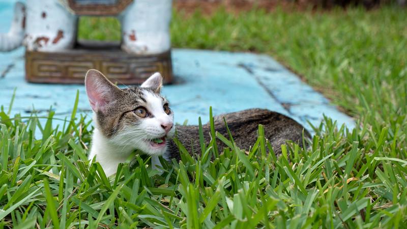 Florida-Keys-Key-West-Hemingway-Home-Cats-14.jpg