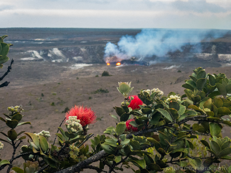 Ohi'a Tree flowers with Halemaʻumaʻu Crater in the background (view from Volcano House hotel)