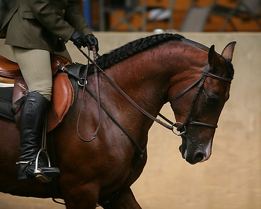 Sunday at Pacific Royal Autumn Classic horse show