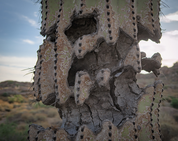 Desert Hike-0616.jpg