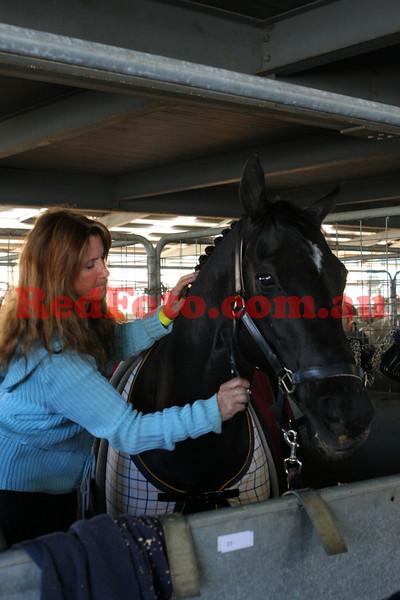 2009 09 26 Perth Royal Show Pony Hack AM